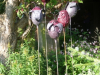 bloemen rood/paars op pin